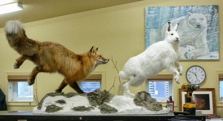 Polarfuchs und Schneehase