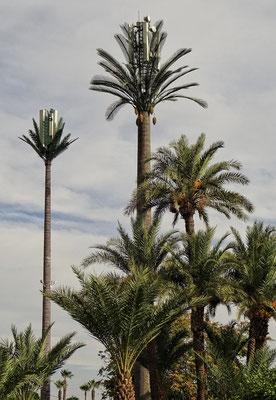 Echte Antennen, falsche Palmen!