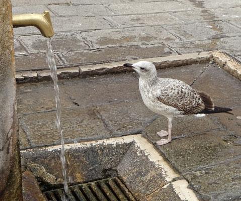 durstig?