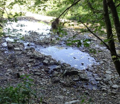 Donauversickerung bei Immendingen