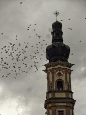 Tauben suchen Nachtquartier