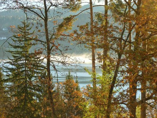 Morgen Nebel über dem Längsee