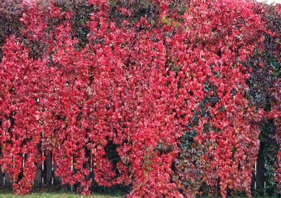 Schon Herbst