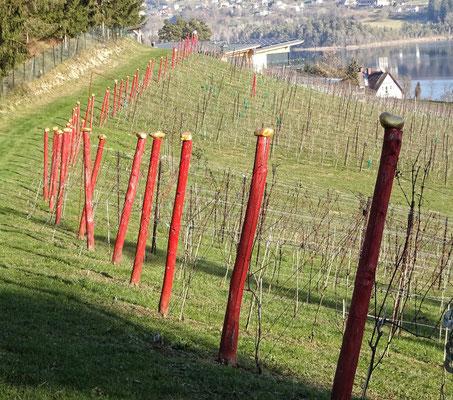 Viel Gold beim Weingarten