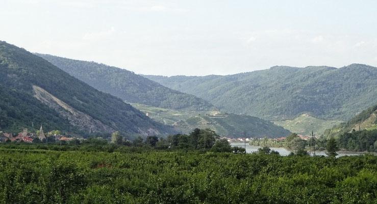 Wachau stromab, Spitz an der Donau und alles Marille