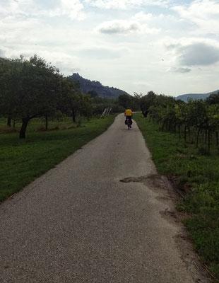 Perfekter Radweg bei Mautern