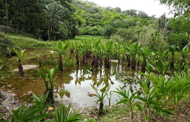 Wasser Palmen