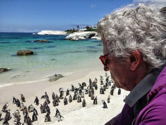Bei den Pinguinen