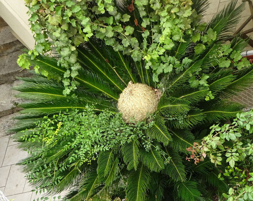 Palmen Frucht