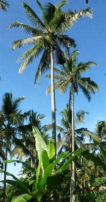 Unter Palmen und Bananen