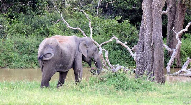 Elefant von der Seite...