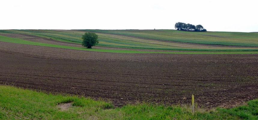 Landschaft bei Goberling