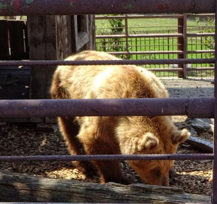 Station zur Rettung von Bären