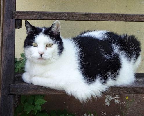 "Katze ""Adolf""?"