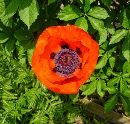 Garten Impression