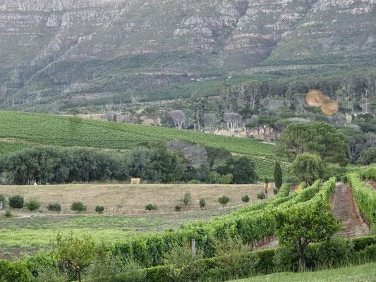 Blick aus dem Restaurant in die Weinberge