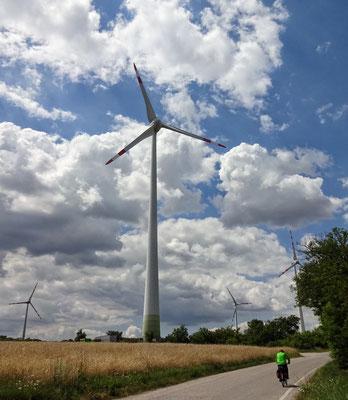 Franz gegen die Windmühlen