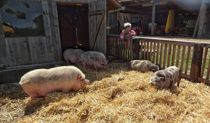 und Schweinen