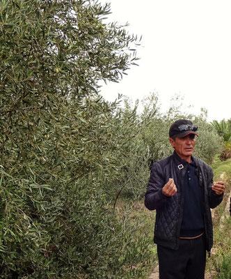 Im Olivengarten