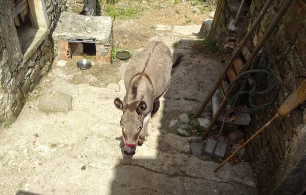 ein einsamer Esel