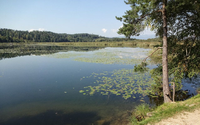 Gösselsdorfer See kurz vor Bad Eisenkappl