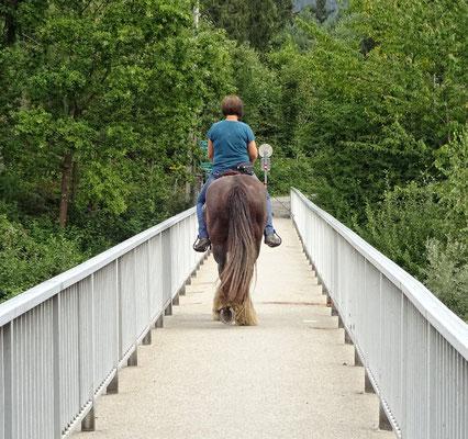 Ross auf Radbrücke, überholen nicht möglich!