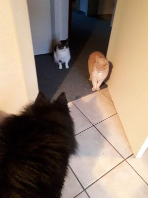 Auch mit den Katzen klappt es!