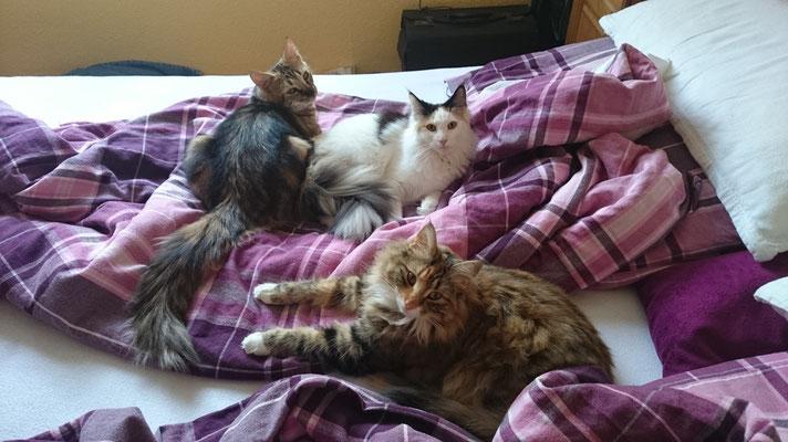Das ist unser Bett!!!