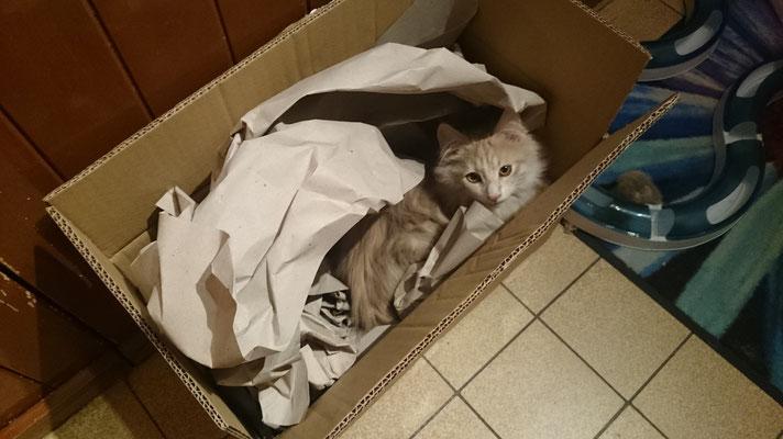Schachteln sind so toll.