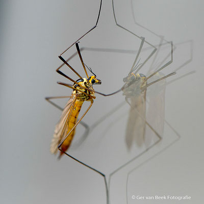 Onbekend insect