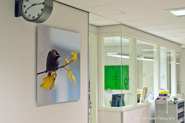 Cardiocare Jeroen Bosch Ziekenhuis