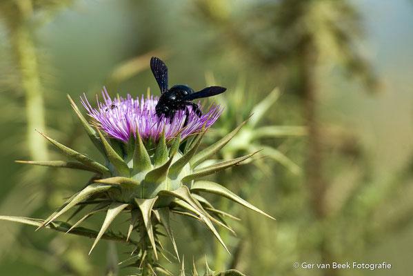 Distel met onbekend insect