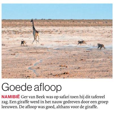 Goede afloop, Brabants Dagblad