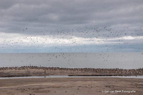 Vogels op de Striep
