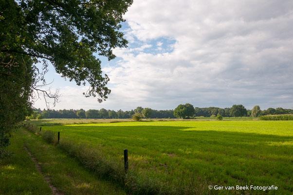 Maashorst