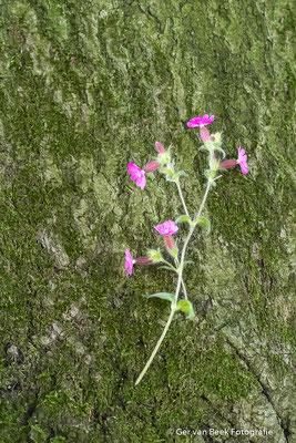 Bloem groeiend uit de schors van een boom