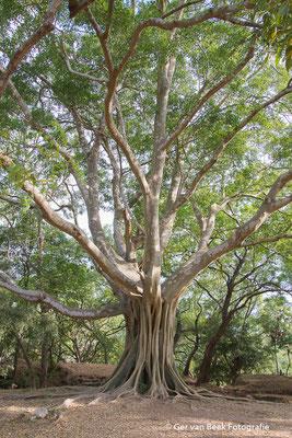 Polannaruwa