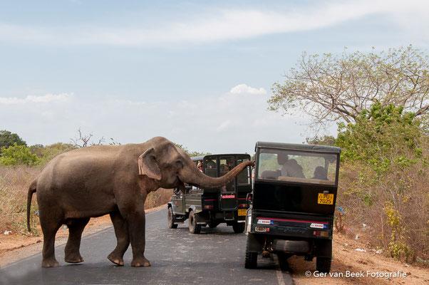 Nieuwsgierige olifant ...