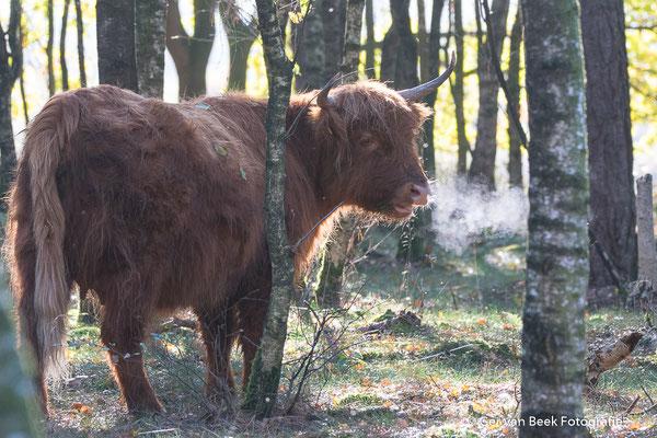Je mag toch niet roken in het bos ........