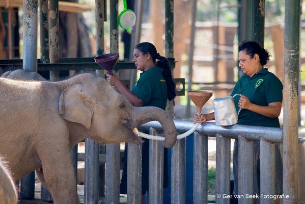 Elephant Transit Home bij Uda Walawe NP