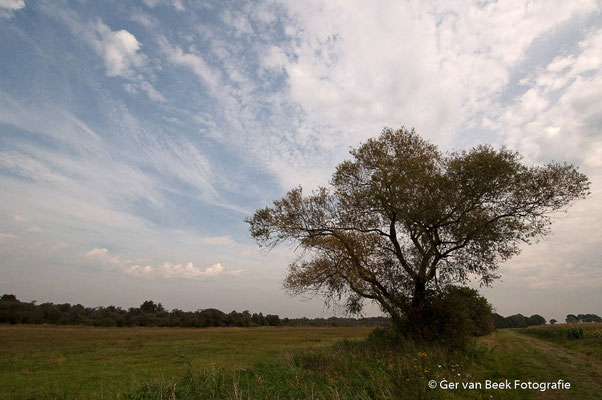 Grasland bij Moerputten