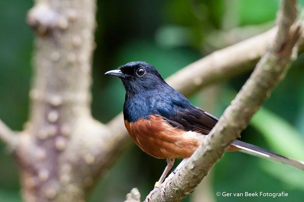 Onbekende vogel