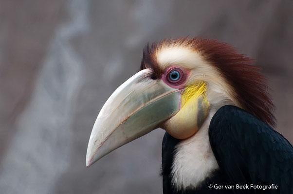 Gewone jaarvogel