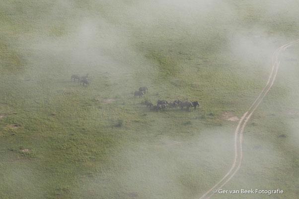 Afrikaanse olifanten in de Masai Mara