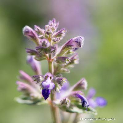 Onbekende bloem