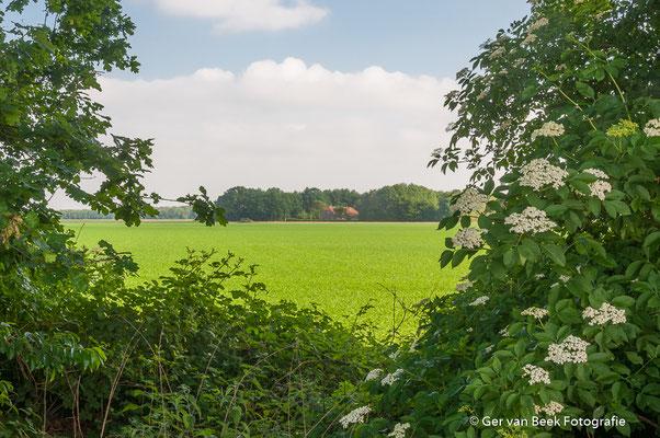 De Maashorst
