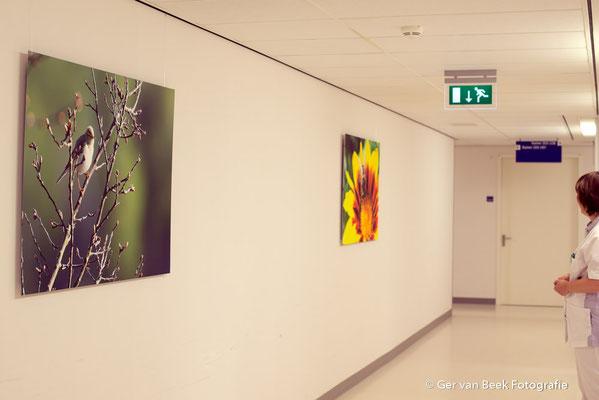 Longbehandelkamer, Jeroen Bosch Ziekenhuis