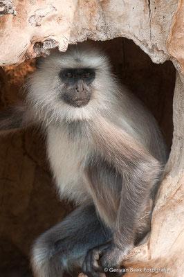 Hanuman aap