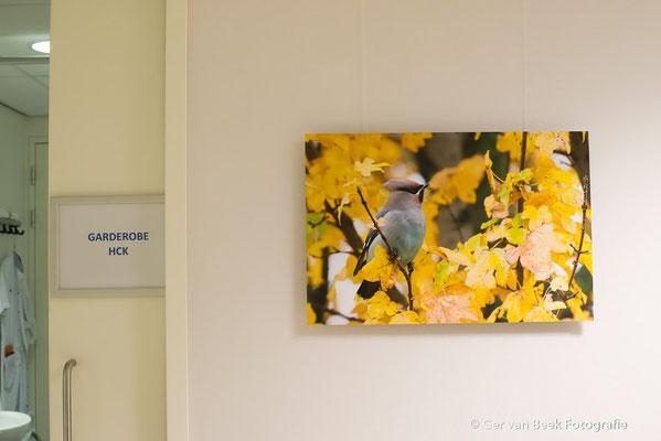 Hart Katheterisatiekamer, Jeroen Bosch Ziekenhuis