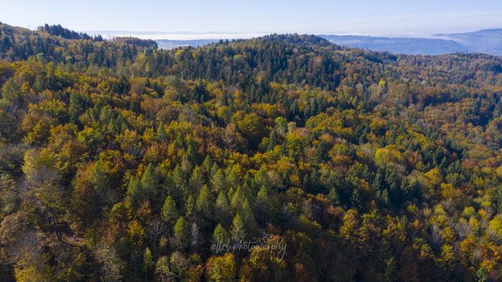 26.10.2019 - Zürich - Uetliberg - Herbstfarben